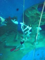 Tauchausbildung Tauchturm Dive4Live