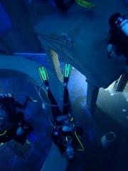 Dive4Life