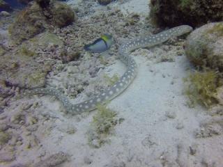 Curacao 2018