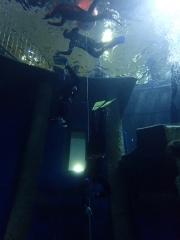 Dive4Live 13.01.2019