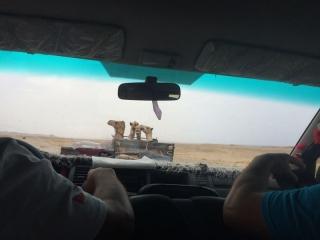 Brayka Bay / Ägypten 2019