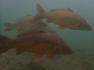 Tauchen im St. Leoner See